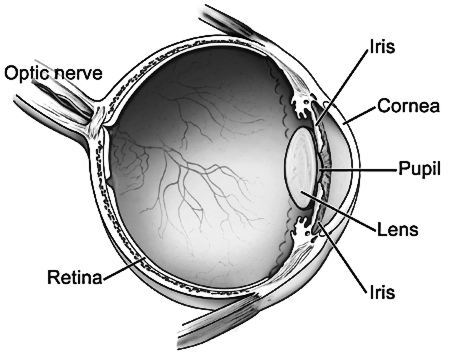 task: use this diagram (public domain from here) and your text to create a  set of notes on the functions of each structure in the eye